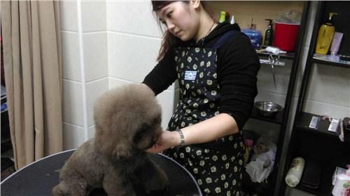 宝山宠物染色价格/宝山宠物染色造型健康保证/安琦尔供