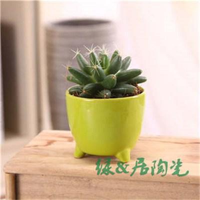 欧美圆形花盆/广州热销欧美圆形花盆供应商值得信赖/绿居供