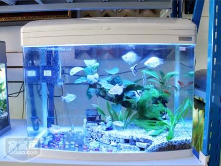 青島不錯的魚缸|嶗山區茶幾水族箱|陸秀琴供