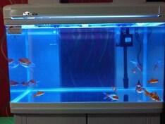 青島免換水魚缸價格|嶗山區水族器材|陸秀琴供