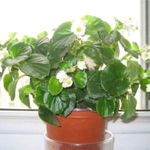 成都植物租赁 成都植物租赁公司 成都植物租赁哪家好 绿江南供