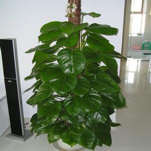普陀区办公室绿化|晓钢供|普陀区办公室绿化工程报价