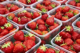 董家镇张而草莓采摘