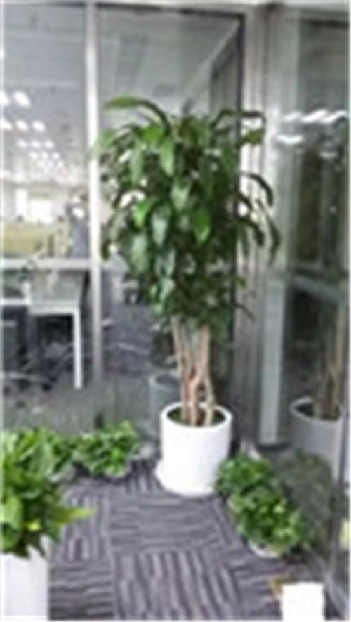 浦东商场植物租赁 浦东商场植物在哪里租赁 信耶供