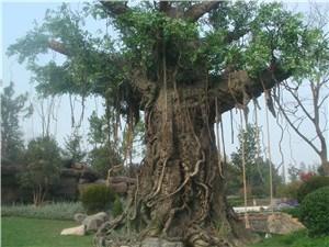 仿真榕树生产商 优质仿真榕树生产商报价行情 榕枫供