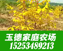 宁津县玉德家庭农场市场部