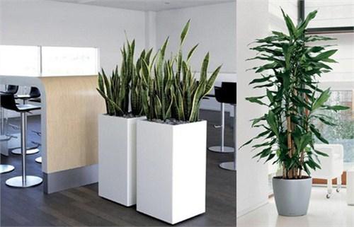 上海办公室花卉租赁 上海办公室花卉租赁供应商 芷兰供