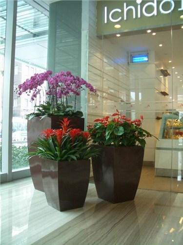 上海会场花卉租售 上海会场花卉租售市场价 芷兰供
