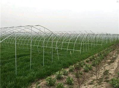 上海蔬菜温室大棚生产厂家/蔬菜温室大棚零厂家价格/智域供