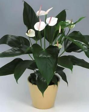 宝山区办公室花卉租赁*质量好的办公室花卉租赁商*森凯供