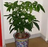 上海办公室绿植出租价格*优质办公室绿植出租价格*森凯供